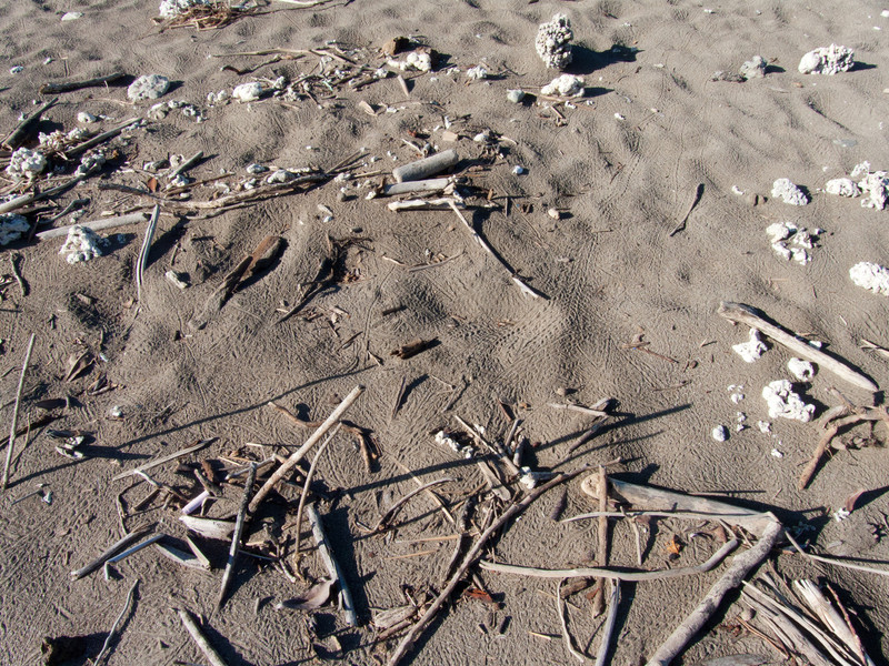 Originally we thought these tracks were from snakes!  But we concluded they were crab tracks.