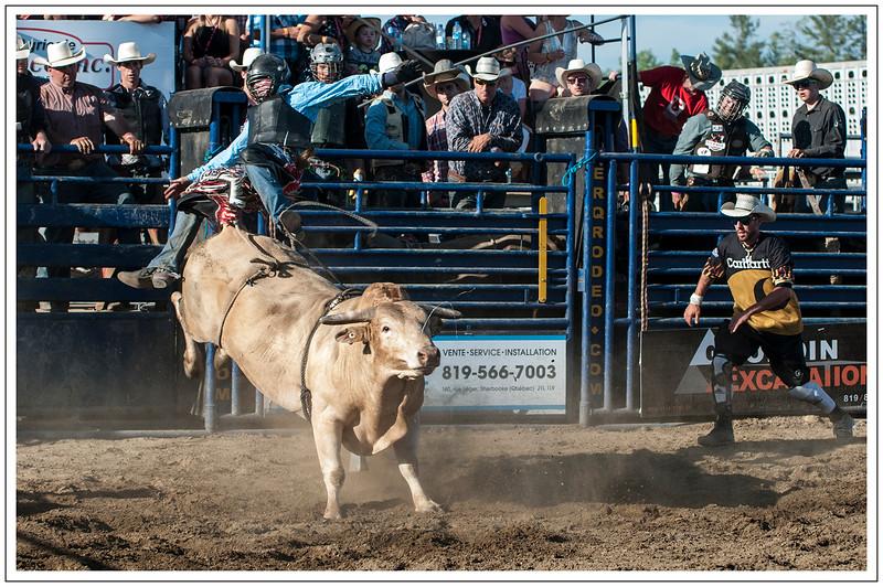 Bull-1 bordered-e