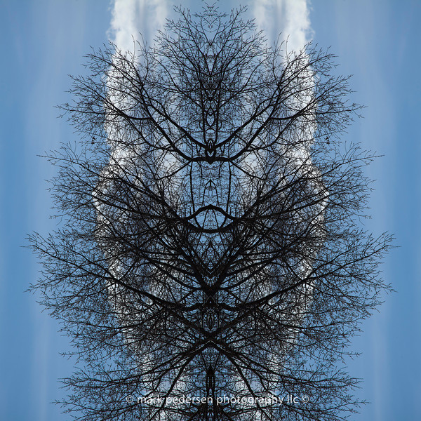 Arbor-Day-01