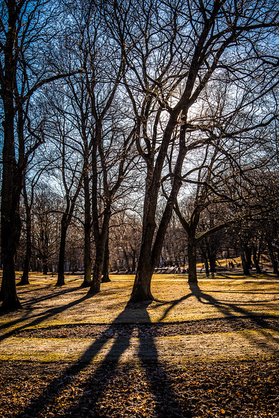 Palace Park (Slottsparken)