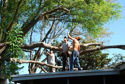 Removing the tree on the roof.