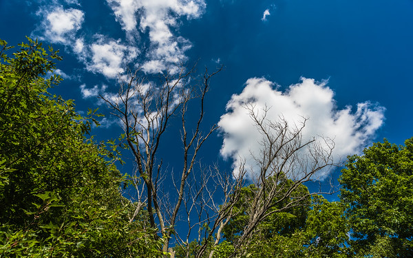 sky & clouds at Coffee Creek Watershed Preserve