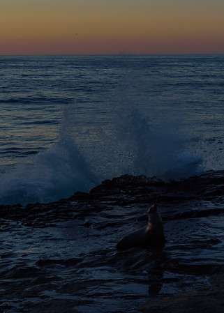 Sea Lion & sunset at La Jolla cove