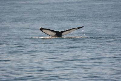 Whale Watching Cruise, San Juan Islands
