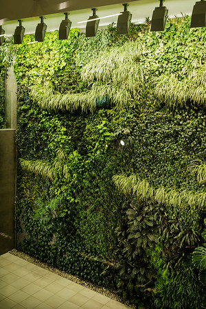 Living Wall - Edmonton Airport