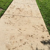 Dirty Sidewalk Spores