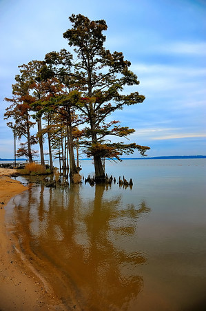 Cypress trees along the James River near the confluence with the Chickahominy River.