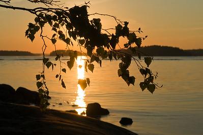 Sunset through Birch leafes at Ruissalo