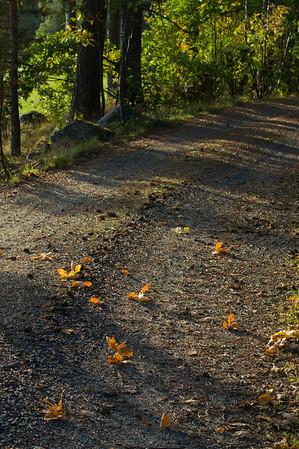 Road in Ruissalo with oak leaves