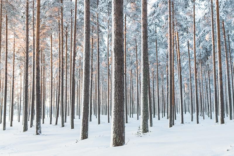Lumi Metsä
