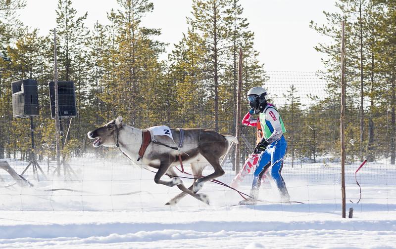 Reindeer Races at Yli-II