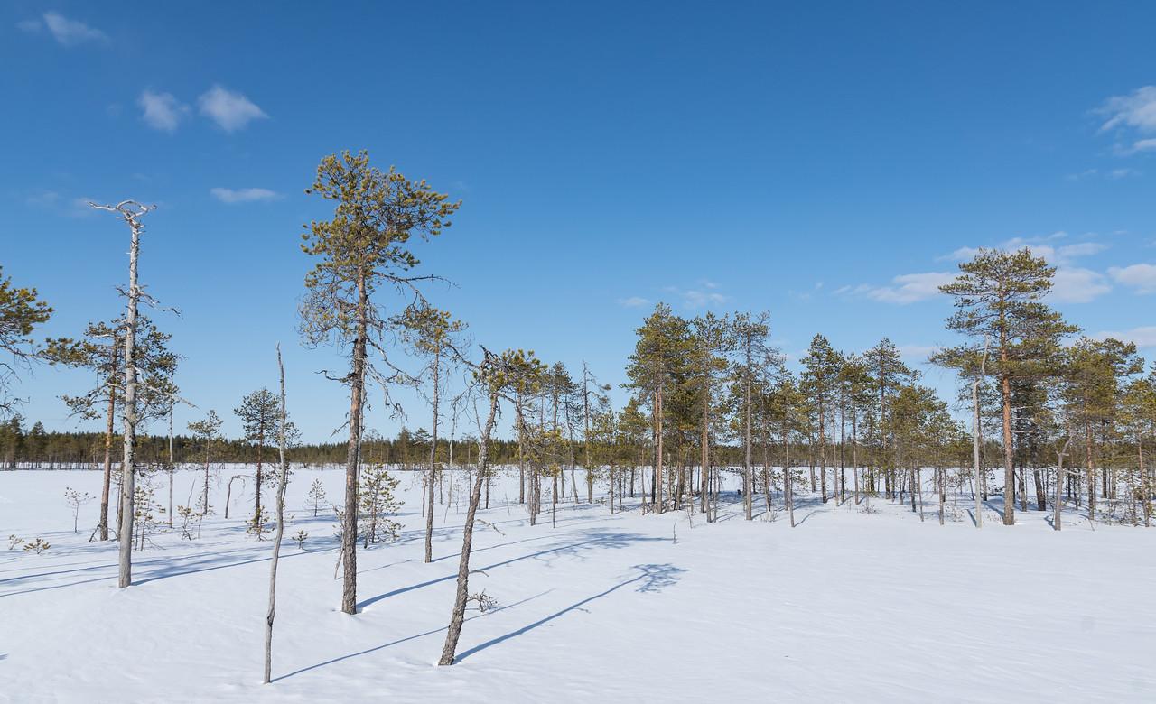 Swamp near Oulu
