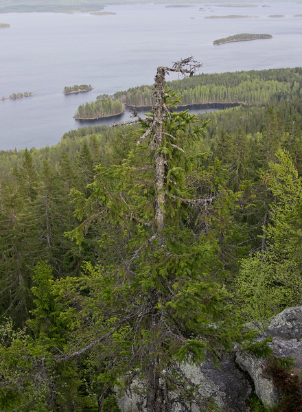 Koli and lake Pielinen