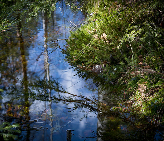 Birch and Moss