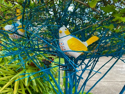 Birds in a Duranta Tree