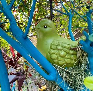 Bird nesting in the Duranta