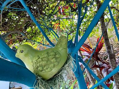 Bird in the Duranta
