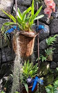 Kona Garden 2021