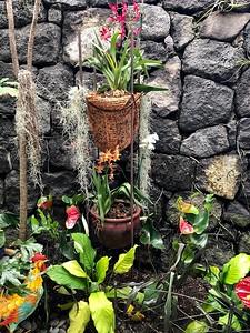 Kona Garden