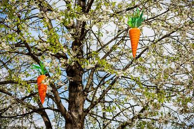 Carrot Trees.