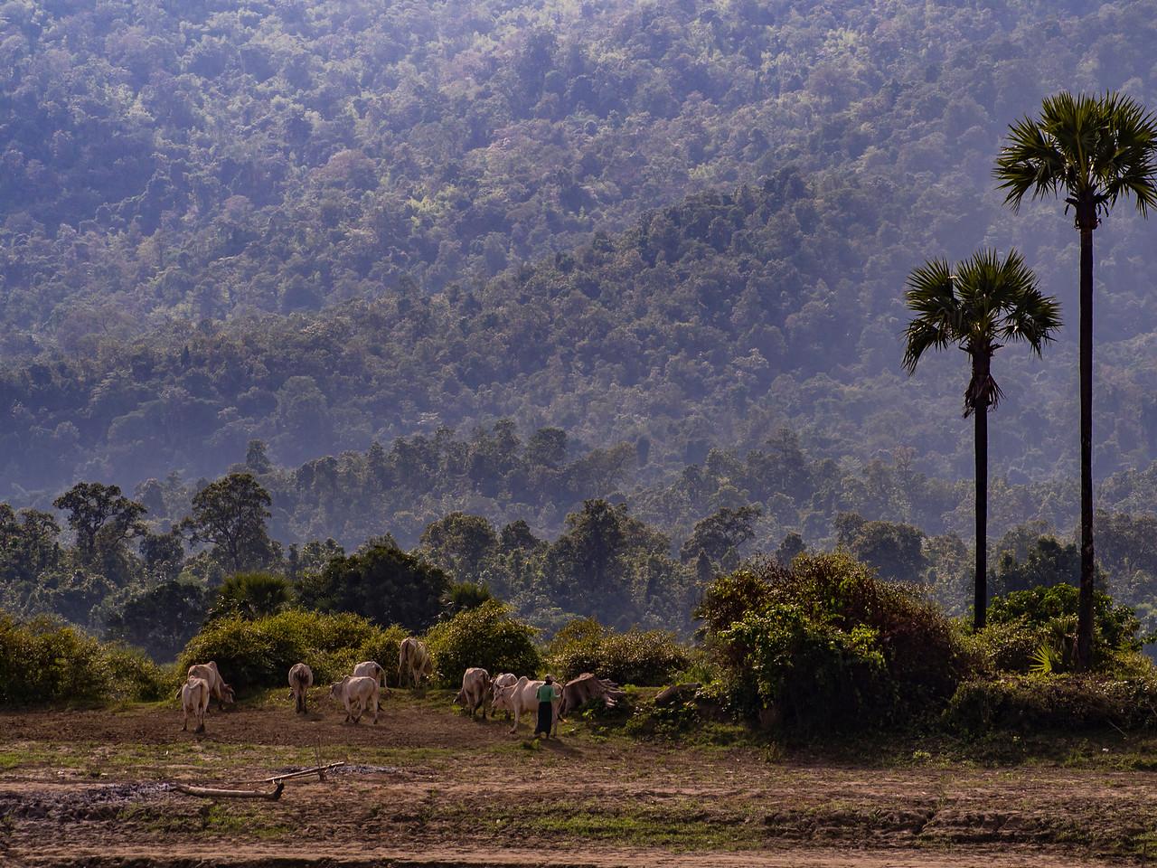 Views along the Chindwin River, Myanmar