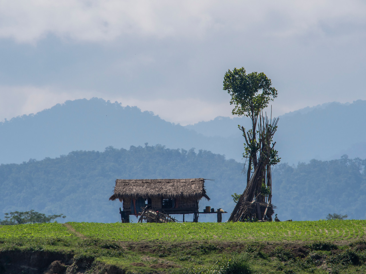 Thatch home with tree on the banks of the Chindwin River