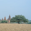 Temples in the Fields
