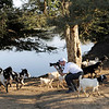 Phil photographs the goats in Bagan