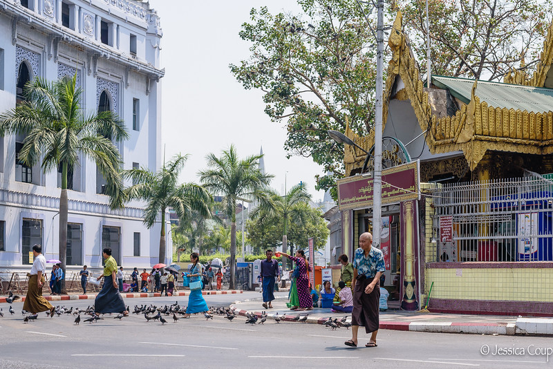 People and Pigeons of Yangon