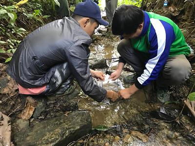 looking for macro-invertebrates