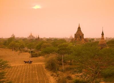 Pagodas-horse buggy-BUR_8771