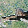 Monkeys rule at Mount Popa