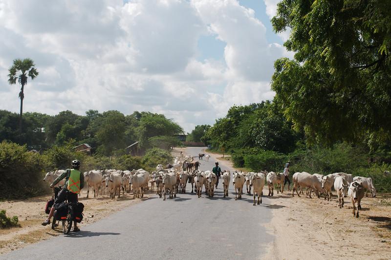 Definitely more livestock than cars
