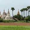 Stupas, temples and royal palm trees, Bagan, Myanmar<br /> <br /> When I saw this scene, I was stuck by the many repeatlng vertical lines, both natural and man-made.