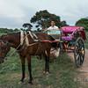 Horse cart and driver, Bagan, Myanmar