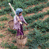 Woman working in the field, Bagan, Myanmar<br /> <br /> Just before I took this picture, her baskets with heaped full of vegetation she had been cutting with a small scythe and she could barely lift the weight.