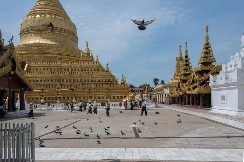 Shwezigon Pagoda with pilgrims and pigeons, Hyuang Oo, Myanmar