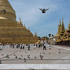 Shwezigon Pagoda with pilgrims and pigeons, Hyuang Oo, Myanmar