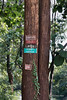 Teak tree with survey and census tags, Mandalay region, Myanmar<br /> <br /> Every teak tree in Burma is counted and labelled to help in the control of poaching.