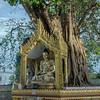 Gold-Buddha-statue-and-banyan-tree-g own-from-a-cutting-from-the-Bodhi-Tree-where-the-Buddha-was-enlightened,-Schwedagon-Pagoda,-Yangon,-Burma.jpg
