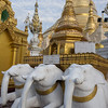 Three-white-elephants,-Schwedagon-Pagoda,-Yangoon,-Burma<br /> <br /> White elephants (the live version) are revered in Myanmar and are symbols of power and prosperity.  The military rulers of Myanmar have three white elephants housed near Yangon, which symbolize their 'right to rule'