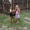 Hank very patiently allowing my grand daughter to play with him.
