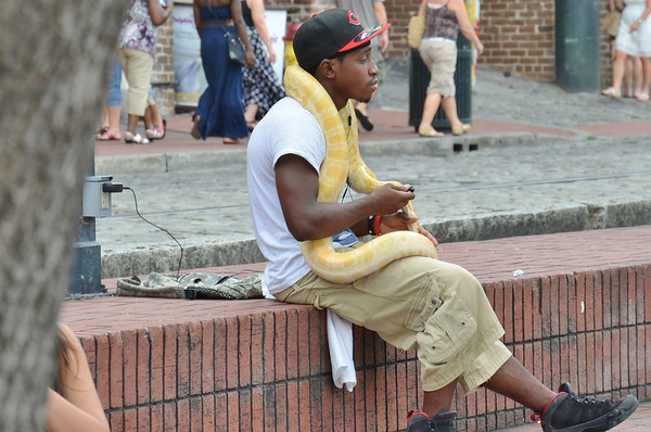 Another shot from this weekend in Savannah. Not really sure what he was doing down on the river front but it made for an interesting shot and yes that is a real albino constrictor.