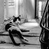 Stair Cat