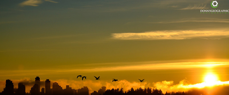 Canada geese at sunset !