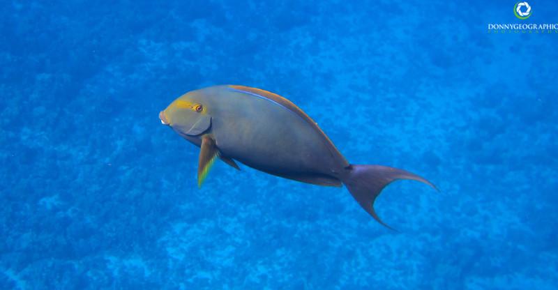 Happy Maui fish lol