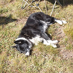 Sage enjoying the sun