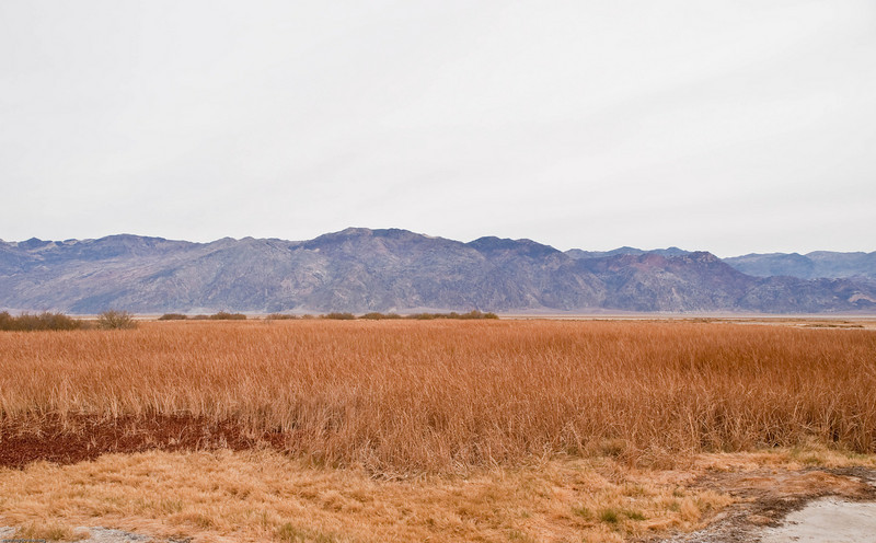Marsh Area in Death Valley
