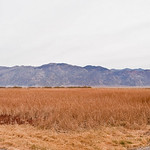 Marsh Area in Death Valley