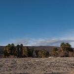 Palms of Saline Warm Springs